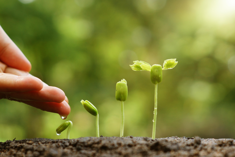 cover hand en groeiend plantje